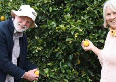 Bluegum Limes