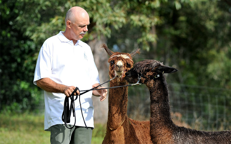 robin wood alpacas