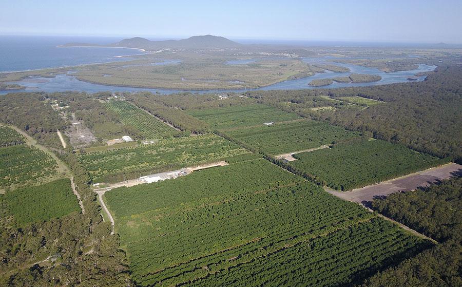 Australian avocado, mango and macadamia crops studied by high tech satellites.