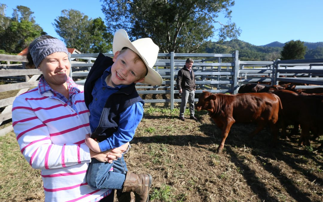 Website opportunity for Macleay Valley farmers